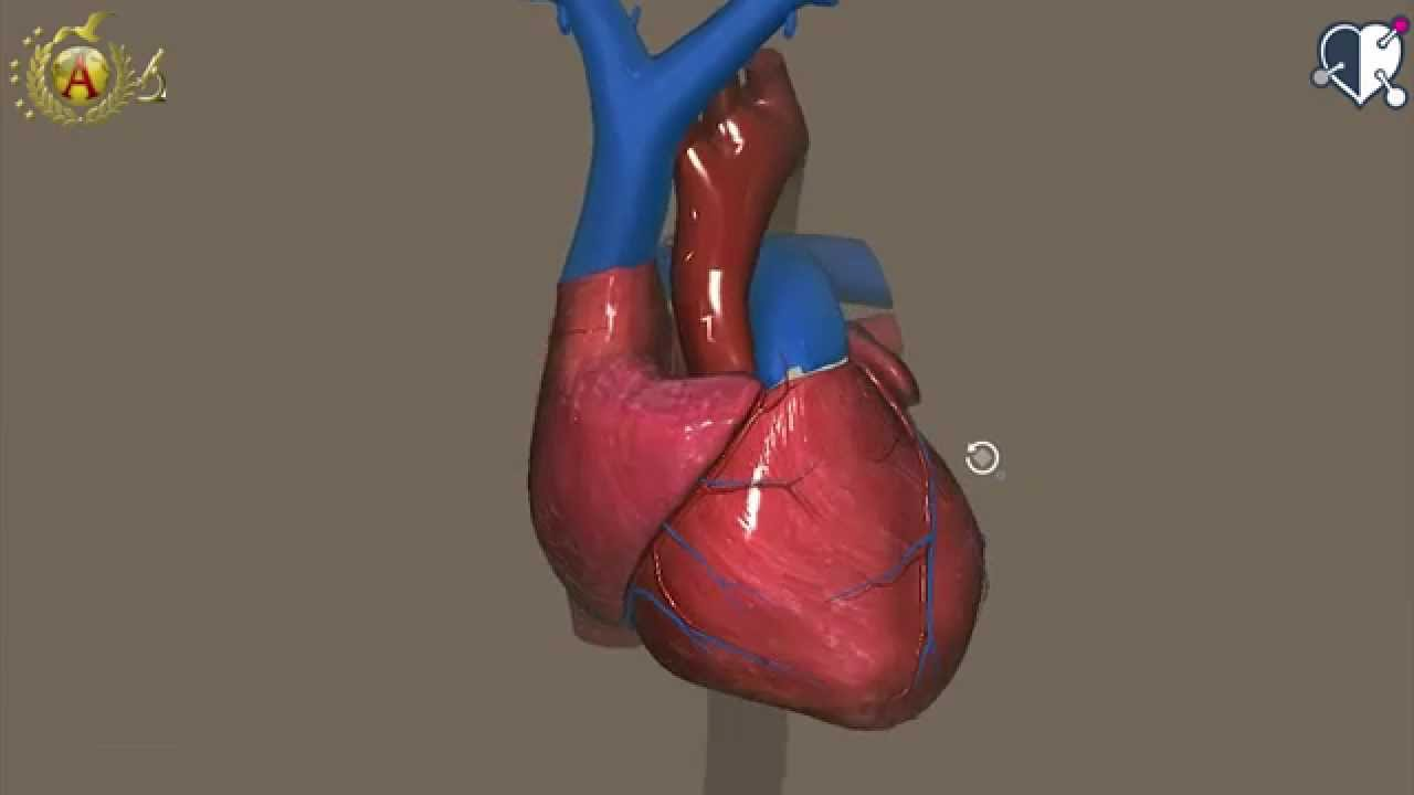 cuore_3d